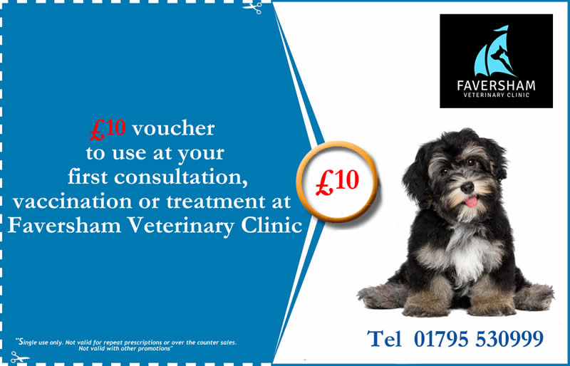 Faversham Vets Voucher